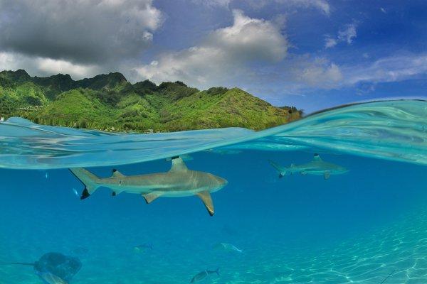 ocean, sea, ecosystem, caribbean, archipelago,