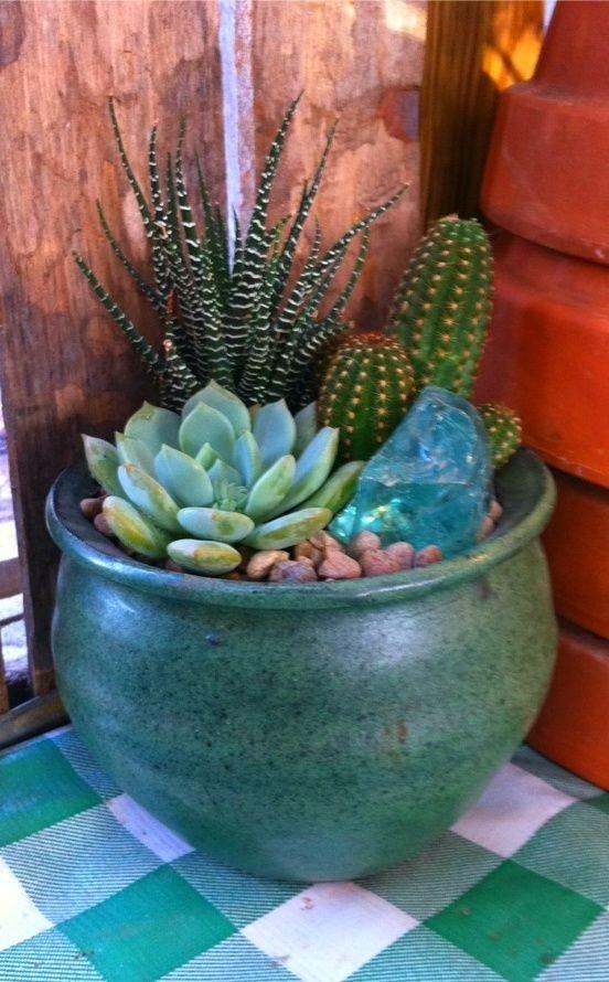 green,plant,cactus,flower,land plant,