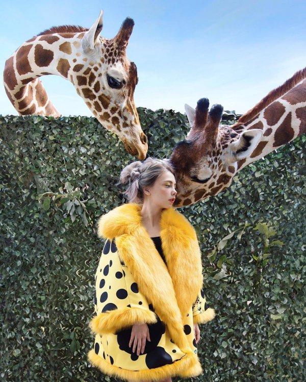 giraffe, mammal, vertebrate, giraffidae, 。2+,