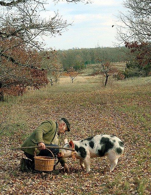 Truffle Hunting, France