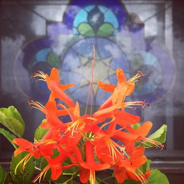 plant, flora, leaf, flower, petal,