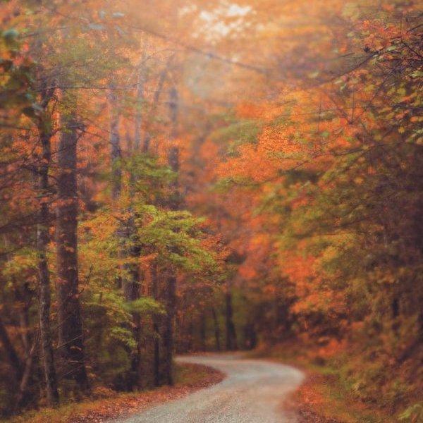 nature, autumn, path, forest, leaf,