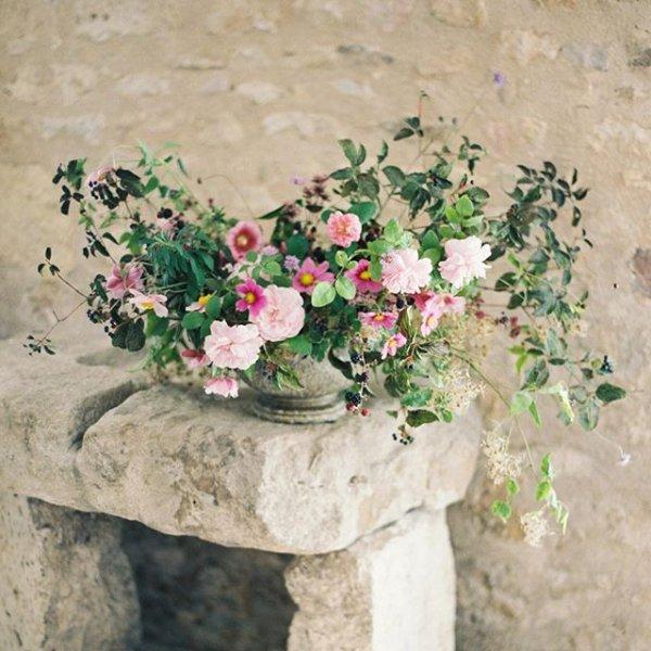 flower, plant, flowering plant, viola, geraniaceae,
