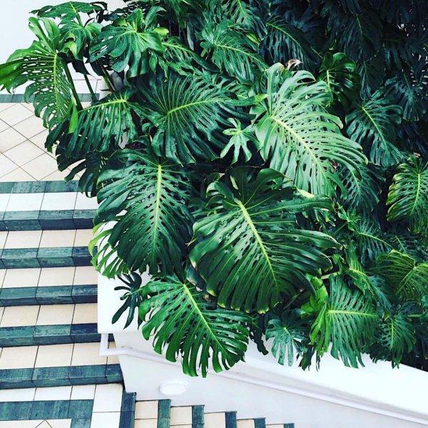 tree, leaf, plant, arecales, palm tree,