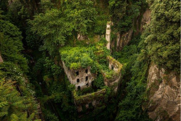 habitat, vegetation, tree, natural environment, ecosystem,