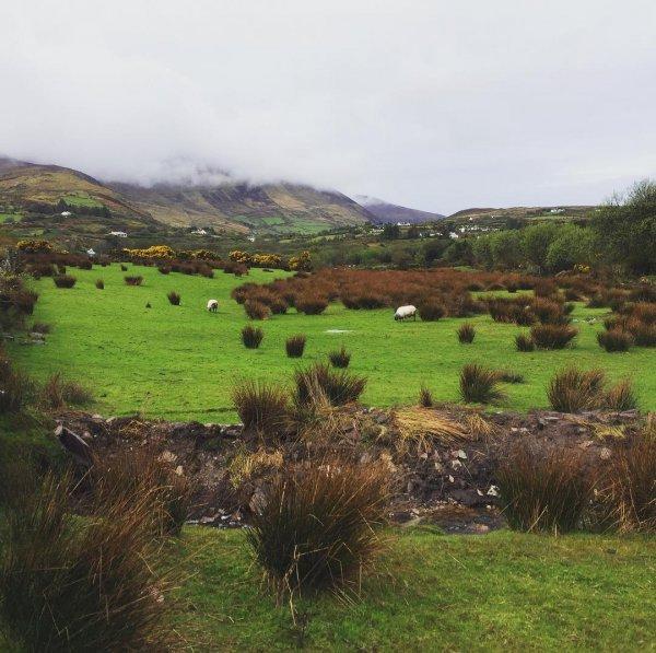 highland, pasture, grassland, ecosystem, nature reserve,