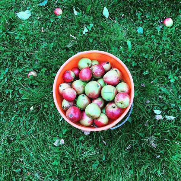 fruit, grass, local food, produce, natural foods,