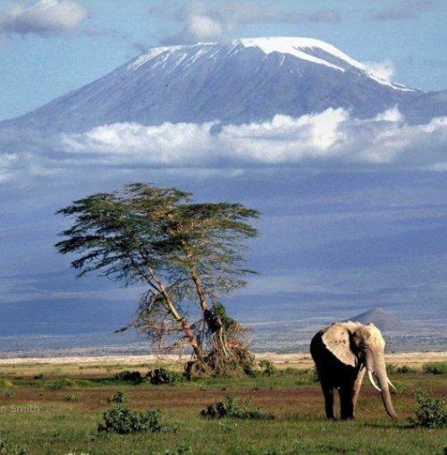 ecosystem, grassland, savanna, wilderness, nature reserve,