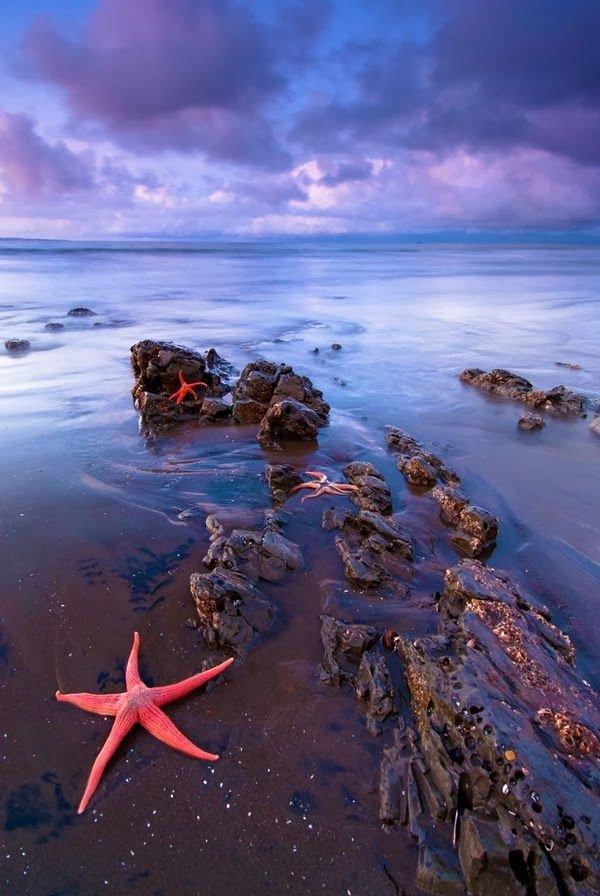 Pink Starfish