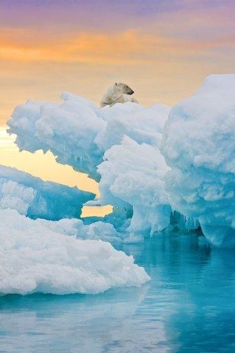 Icebergs & Polar Bear