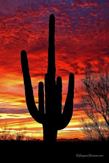 Arizona - Saguero National Park