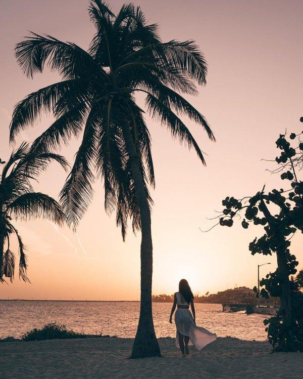 palm tree, tree, arecales, woody plant, sky,