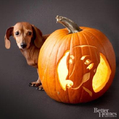 Adorable Dog Breed Pumpkin Carving Ideas...