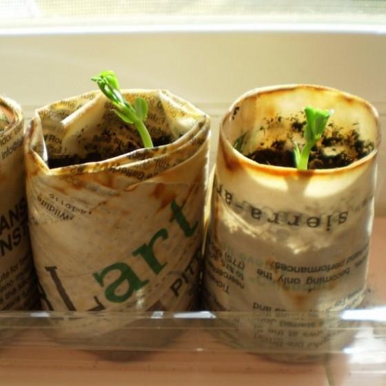 Seedling Starter Pots