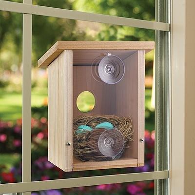 Build a Birdhouse View