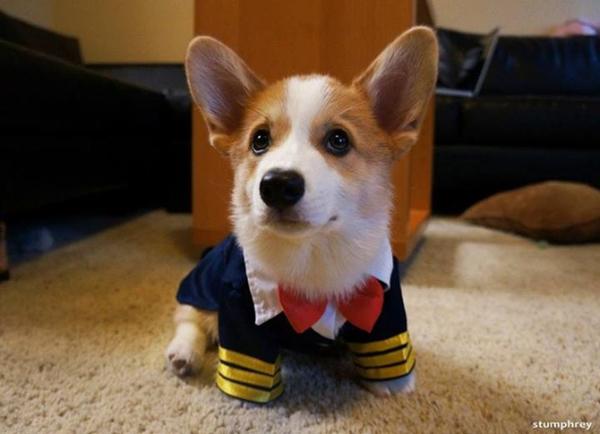 Tiny Sailor…