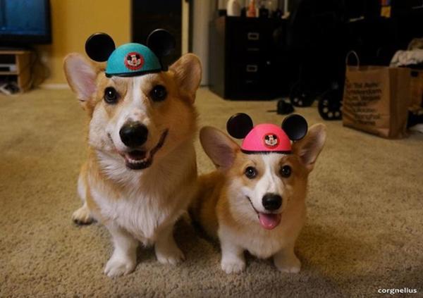 Disney Dogs…