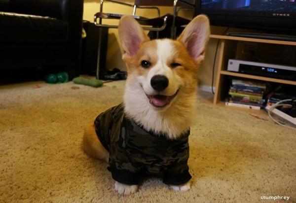 Army Dog…