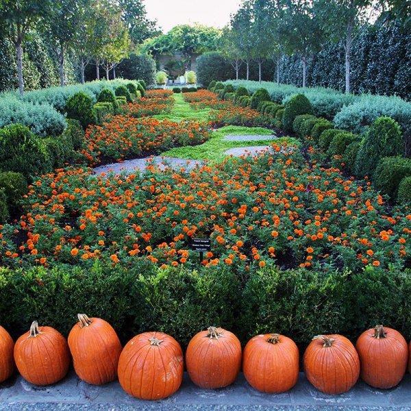 garden, botanical garden, pumpkin, cucurbita, plant,