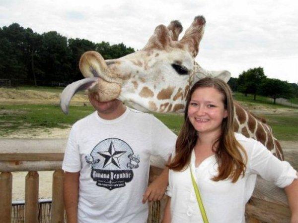 Giraffe Gaffe