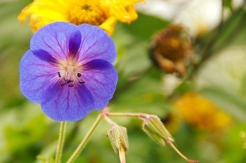 flower,plant,flora,botany,land plant,