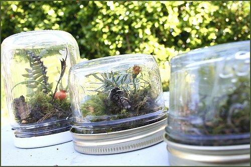 Baby Jar Terrarium