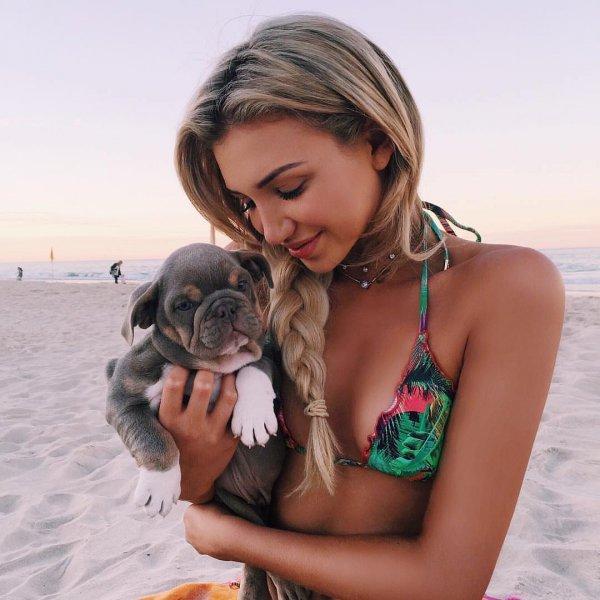 dog, dog like mammal, vacation, beach, pug,