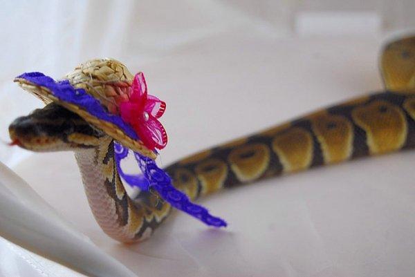 Fancy Straw Bonnet