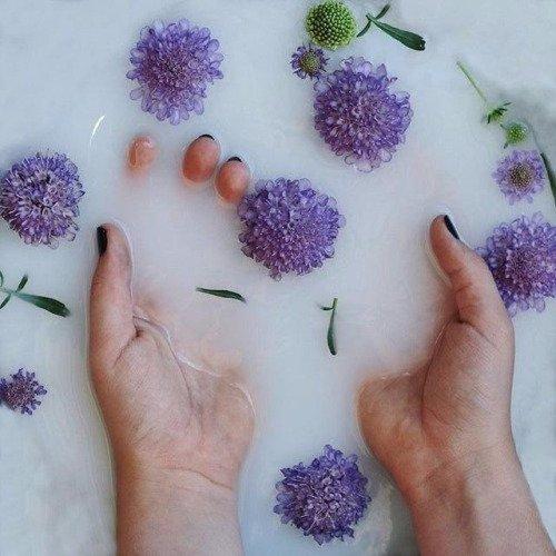 purple, blue, flower, violet, lilac,