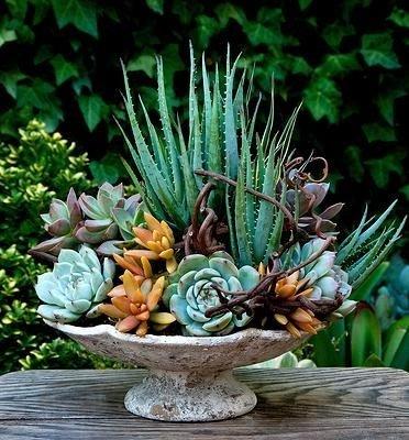 flora,plant,flower arranging,tree,flower,