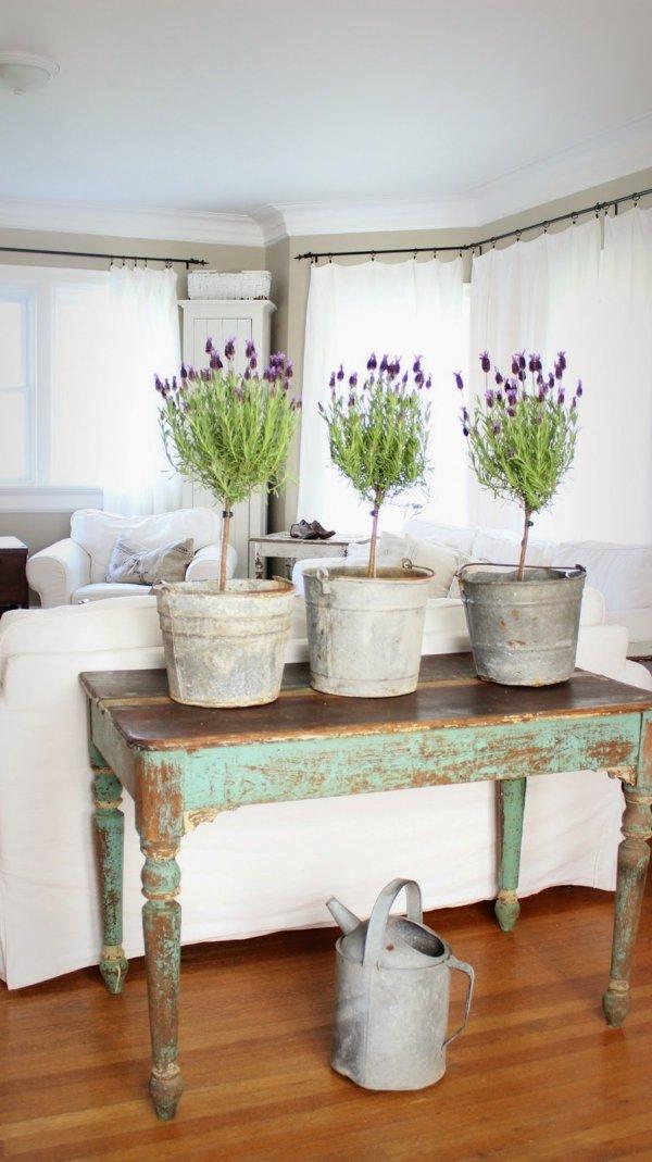 Lavender Topiaries in Galvanized Buckets