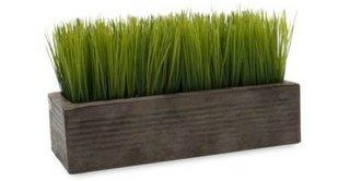 wheatgrass,grass family,plant,grass,produce,