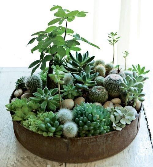 plant,produce,land plant,food,houseplant,