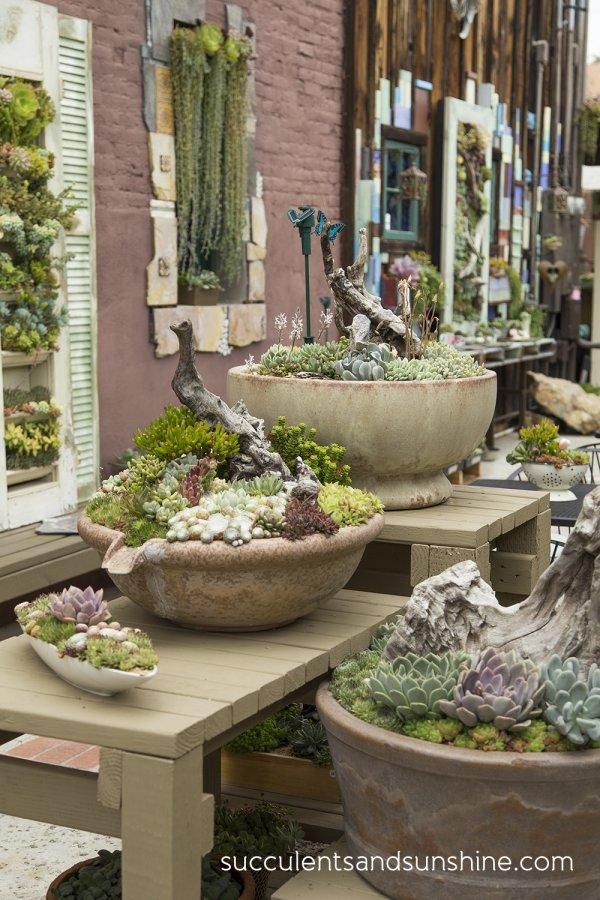 plant,garden,floristry,yard,backyard,