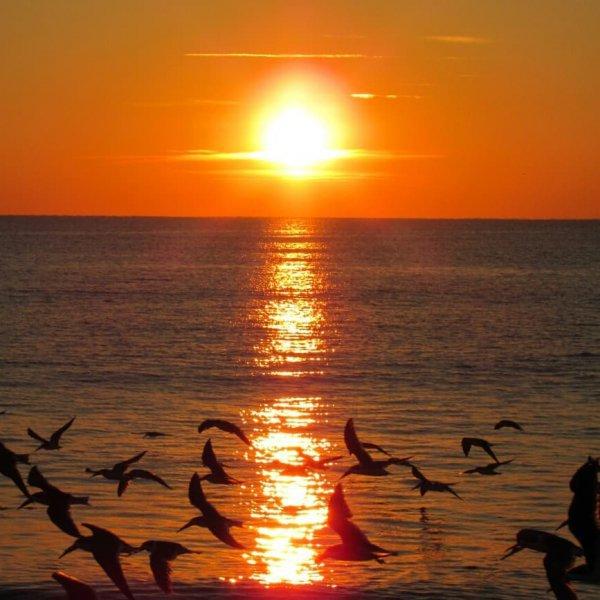 sunset, horizon, sunrise, sun, sea,