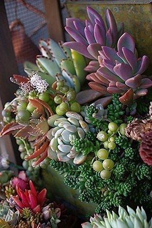 flower arranging,flower,floristry,flora,plant,