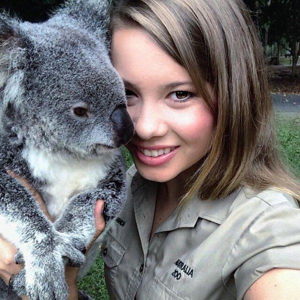 koala, mammal, vertebrate, nose, marsupial,