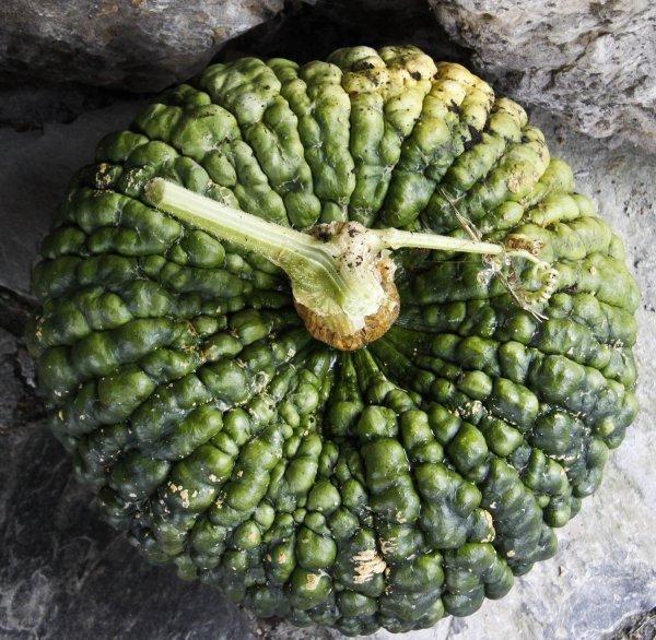 Manna Di Chioggia Pumpkins