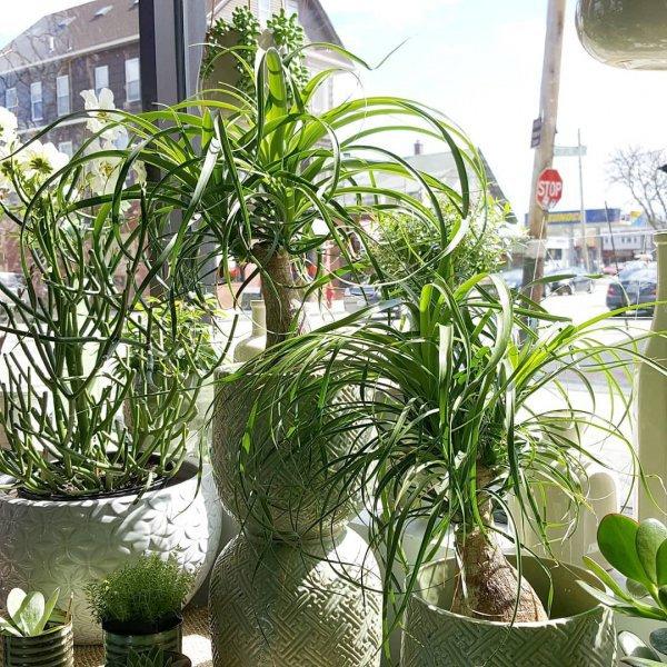 plant, flowerpot, houseplant, herb, arecales,