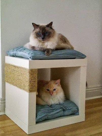 cat,small to medium sized cats,kitten,cat like mammal,