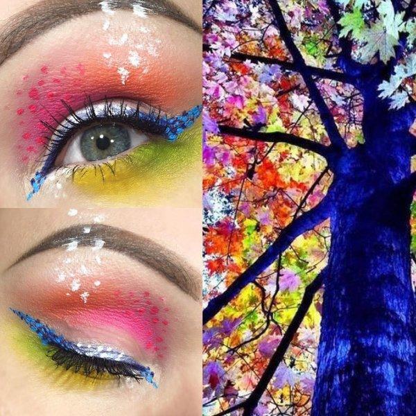 A Photo of the Rainbow Tree
