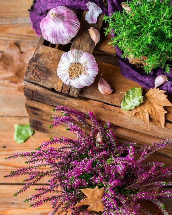 purple, flower, plant, violet, spring,