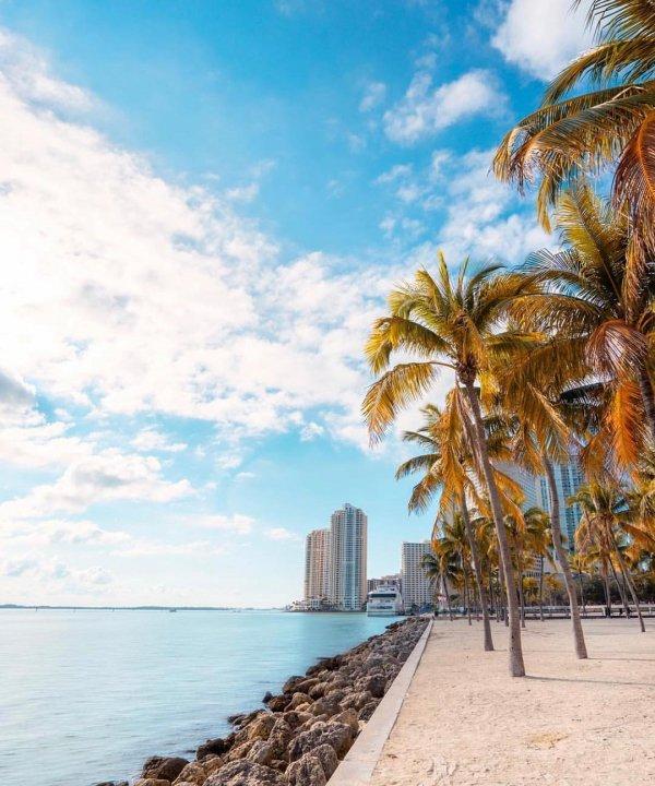 Sky, Tree, Palm tree, Daytime, Sea,