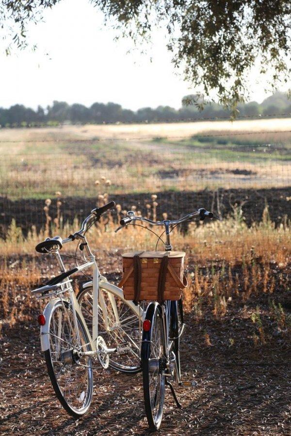 Bikes & Fields