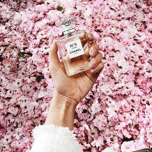 pink, flower, cherry blossom, spring, plant,