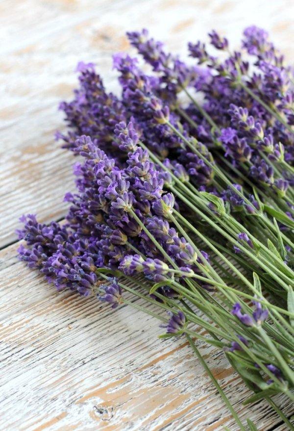 Lavender, Flower, English lavender, Purple, Lavender,