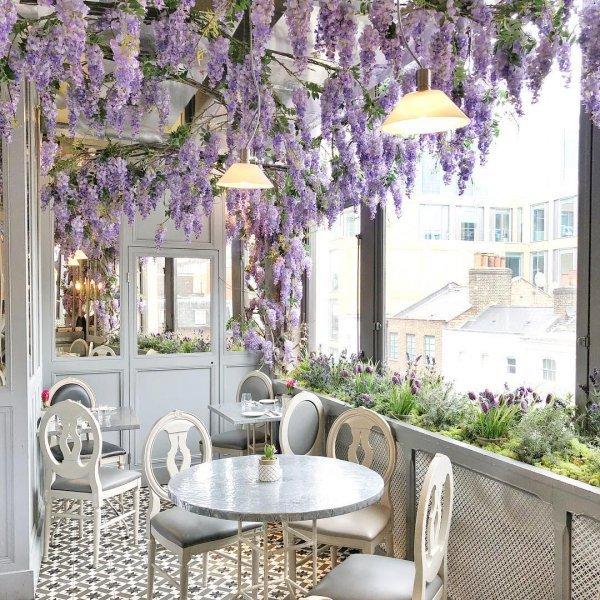 purple, interior design, wall, home, flower,