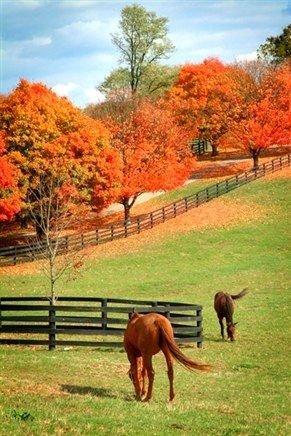 Autumn in Kentucky