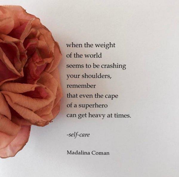 text, flower, petal, rose family, rose,
