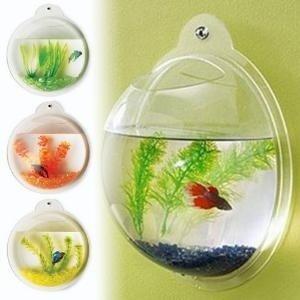 product,goldfish,glass,